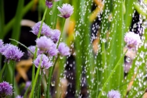 Bewässerung mit Gartenpumpe
