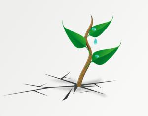 Flexibler Gartenschlauch Test