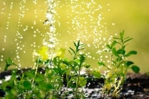 Bewässerungssystem Test