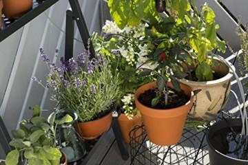 GARDENA 1265-20 city gardening Urlaubsbewässerung, Bewässerung wird täglich für 1 Minute über Transformator mit integriertem Zeitschalter aktiviert, bis zu 36 Topfpflanzen können automatisch bewässert werden - ideale Urlaubsvertretung für Ihre Pflanzen - 2